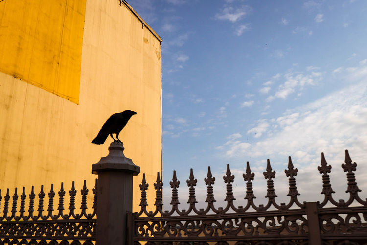 Yellow & crow Bird Animal Themes Vertebrate Animal Architecture Animal Wildlife Sky Animals In The Wild Built Structure Low Angle View One Animal Cloud - Sky Building Exterior No People Perching Day Building Nature Outdoors Silhouette Crow Yellow Birds Of EyeEm