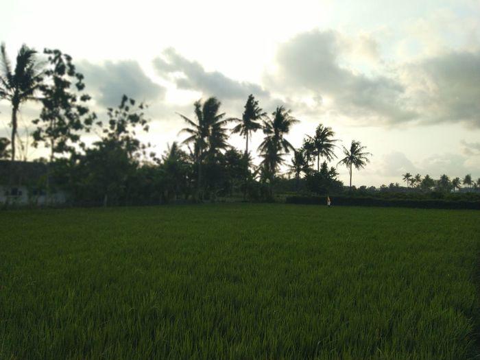 fields Tree