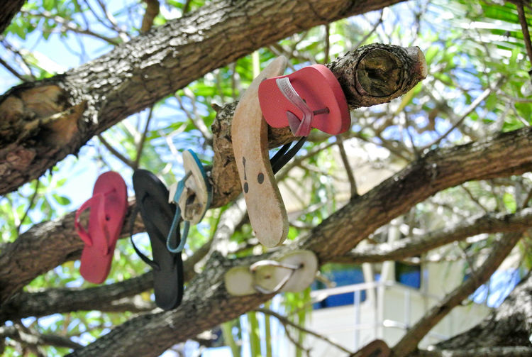 Missing slipper nail on branch tree at the beach in Hawaii. Slipper  Hawaii Missing Beach Branch Close-up Day Focus On Foreground Hanging Loss Low Angle View Missing Slipper Nail No People Outdoors Pink Color Plant Tree Tree Trunk Trunk