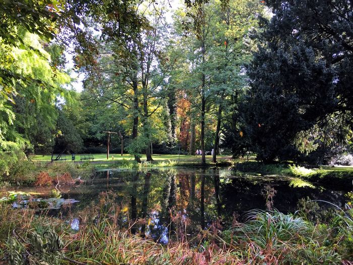 Reflection Nature Water Tree Lake Tranquil Scene Beauty In Nature Tranquility Scenics Growth Outdoors Forest No People Day Grass