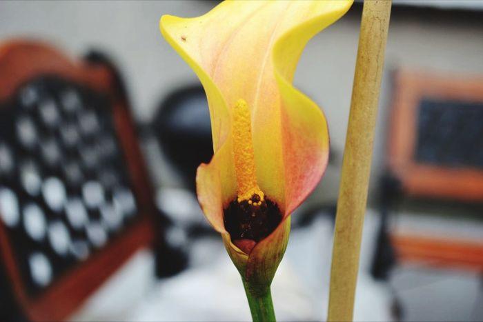 Flower MyBackGarden