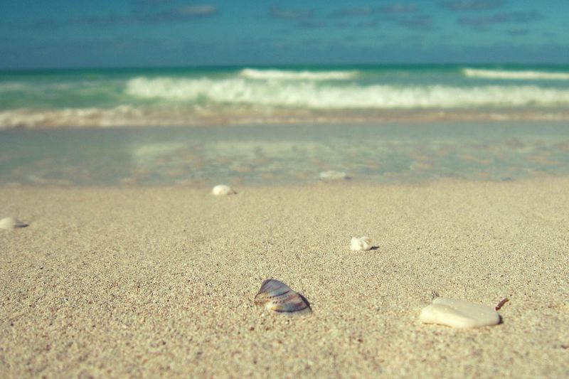 Beach Sand Sea Shore Nature Outdoors Horizon Over Water Day Water Close-up No People Beauty In Nature Sky Unique Uniqueness Unique Beauty Seashell Seashells Purple Shell Purpleshell Varadero Beach - Cuba Varaderobeach Cuba Beach Varadero Varadero, Cuba