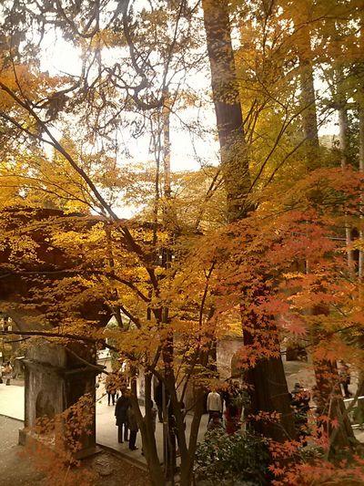Japan Kyoto,japan 南禅寺 水路閣 Autumn Colors