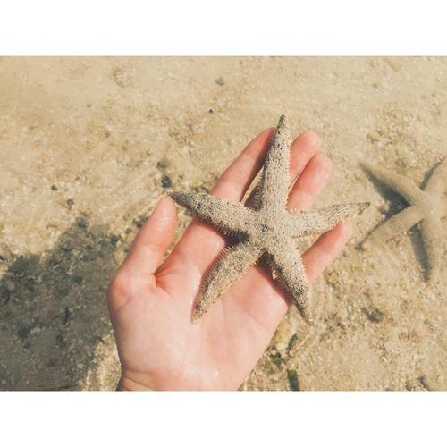Cropped Hand Holding Starfish At Beach
