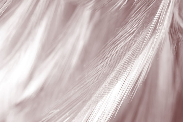 Close-up Backgrounds Selective Focus Full Frame Hair No People Pattern Textured  Extreme Close-up Indoors  Abstract Textile Nature Beauty Blond Hair Wool Macro White Color Equipment