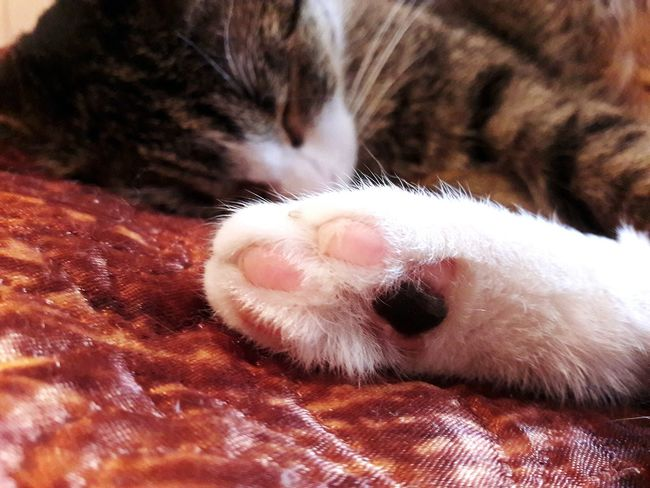 Cat's Paw Cat Photography Cats Of EyeEm Cat Sleeping Cat Sleeping Positions