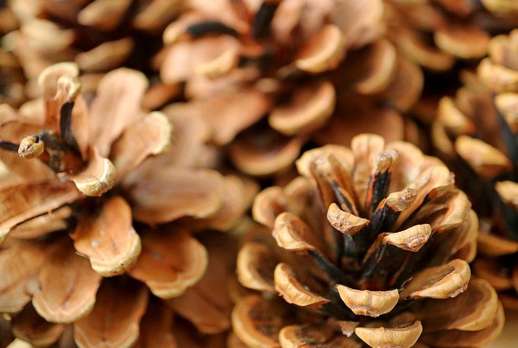 Full frame shot of dried beans