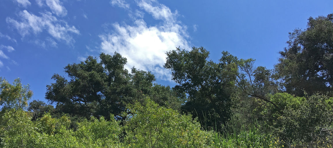 Blue sky with some clouds over the coastal foothills in Santa Barbara at springtime Tree Plant Sky Growth Beauty In Nature Tranquility Tranquil Scene Scenics - Nature Nature Land Day Green Color Low Angle View Cloud - Sky No People Forest Non-urban Scene Outdoors Blue Sunlight