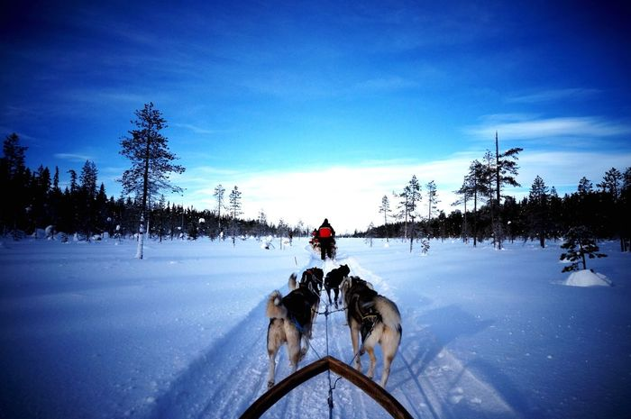 Dogsledding Finland Snow White Levin Kittira フィンランド 湖上 犬ソリ