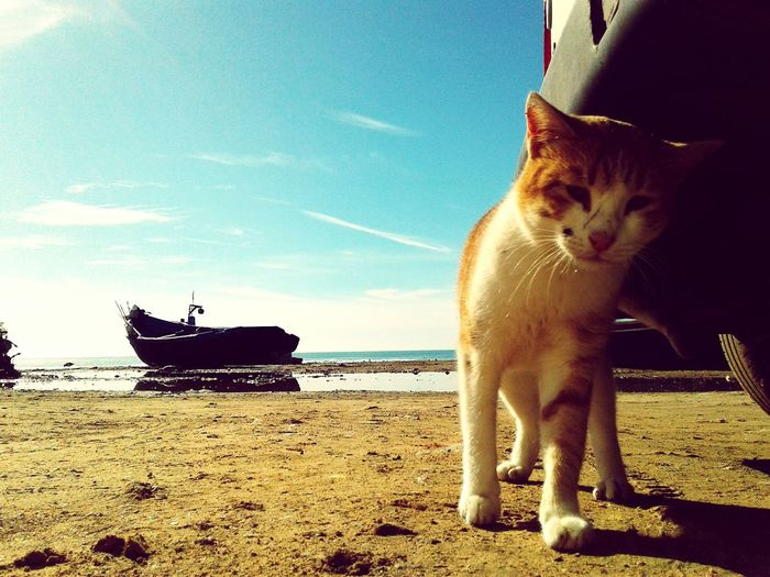 Cat And Sea Cats Cat & Sea Fishing