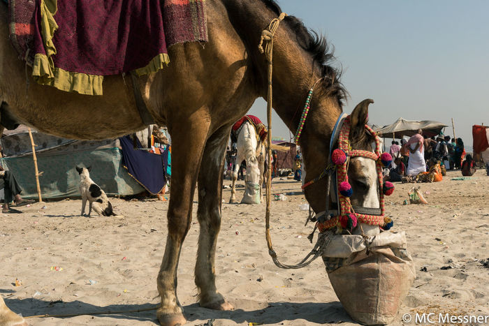 Everyday Life Horse India Indiapictures Street Photography Streetphotography Travel Travel Photography Varanasi Varanasi Ganges Varanasi India