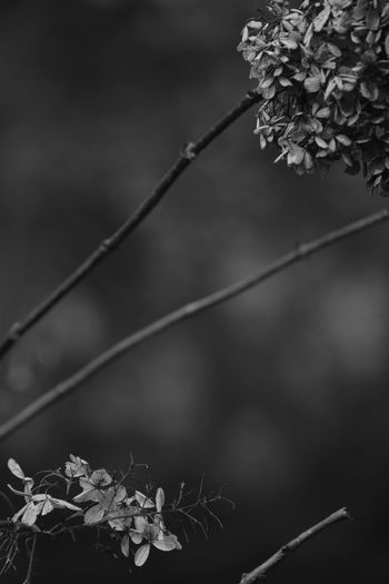 Beauty In Nature Black Branch Close-up Day EyeEm Bnw EyeEm Flower Focus On Foreground Freshness Growth Leaf Lightandshadow Nature No People Outdoors Plant Texture Tree Twig White BYOPaper!