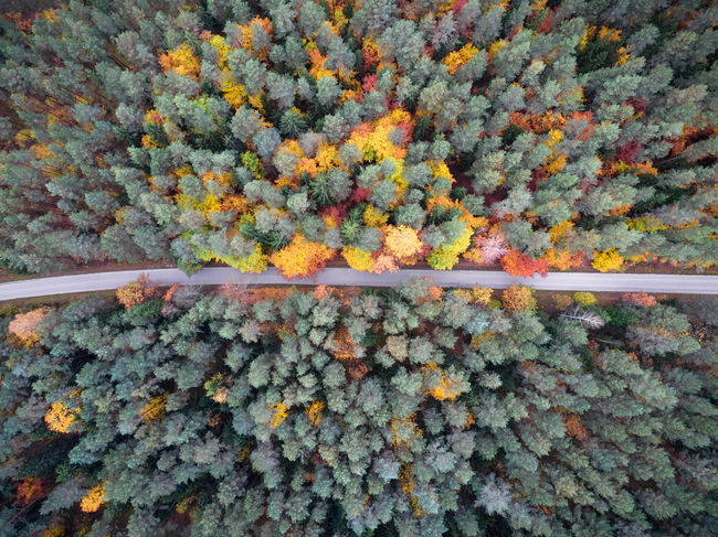 Autumn Drone  EyeEm Best Shots Road The Week On EyeEm Transportation Autumn Beauty In Nature Change Color Day Dji Flower Forest Fragility Freshness Full Frame Growth Leaf Nature No People Outdoors Phantom Plant Tree