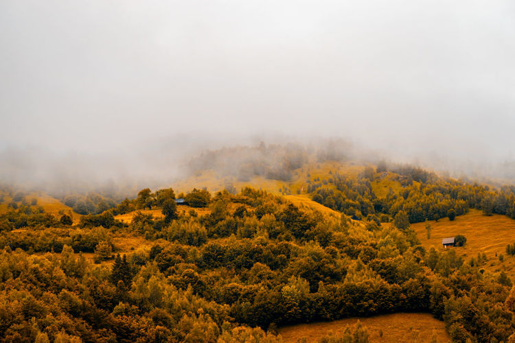 Autumn panoramic landscape of a hill forest in moieciu de jos, brasov, transylvania, romania.