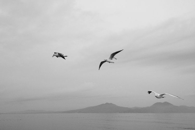 Seagulls in flight Monochrome Tranquility Black And White Nature Seagull In The Air Birds Tranquil Scene Seagulls In Flight Clouds And Sky Sea IPhoneography Beauty In Nature Sky Scenics Spread Wings Flying Seagull Ferry Views Calm Sea Day Japan