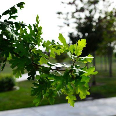 Tree Leaves Park Bokeh
