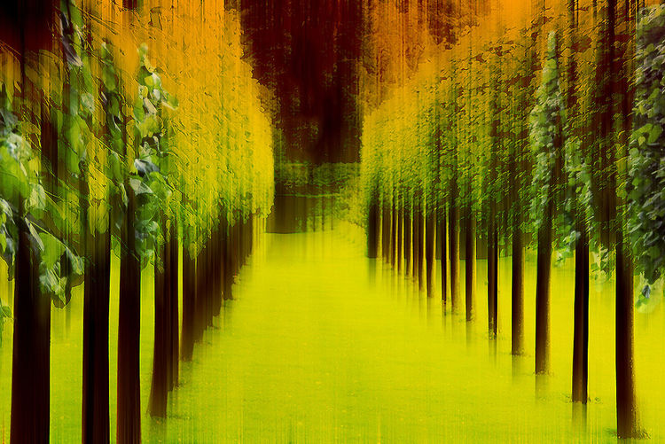 Painted image of trees in forest