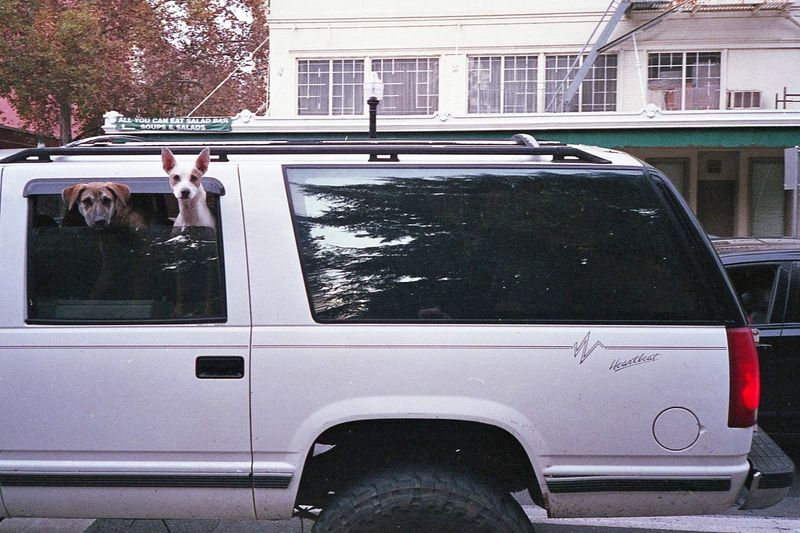 Sacramento 2016. Dogs Dogs In Cars Transportation Window Mode Of Transport Car Tree Land Vehicle Outdoors Building Exterior Architecture Day Driveway No People Film Photography Nikon L35AF / Fuji 400