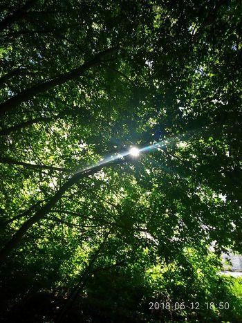Мессер..))) Которого наше поколение вряд ли увидит.. Tree Beauty In Nature Water Day Forest No People