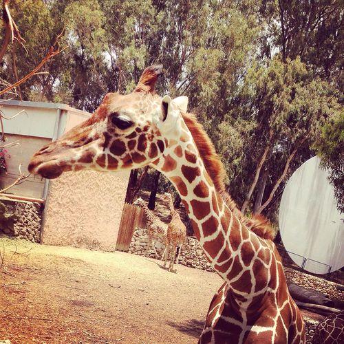 Safari Park Ramatgan