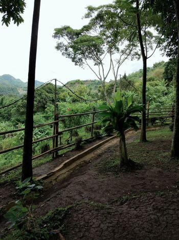 Bale bambu, ciwidey