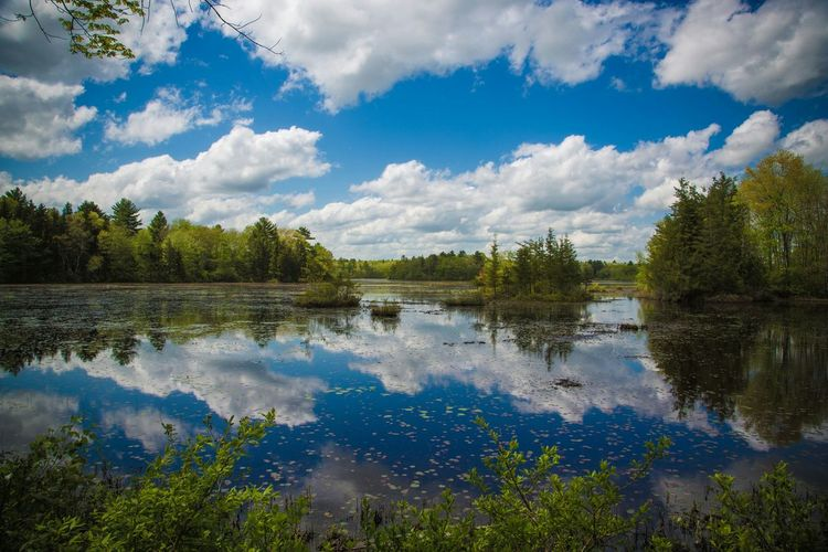 Reflection of clouds and trees on pond at borderland state park
