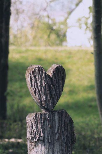Close-up of heart shape on wooden post in field