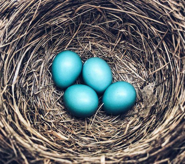 Fragility Nest