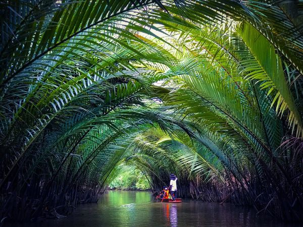 Rowing boat passes through the tunnel of nipa palm leaves in Surat Thani, southern province of Thailand. Palm Tree Water Green Color Nature Plant Day Tree Outdoors People Adult Nipa Boat Rowing Rowingboat Green Eco Tourism Thailand Suratthani The Great Outdoors - 2017 EyeEm Awards