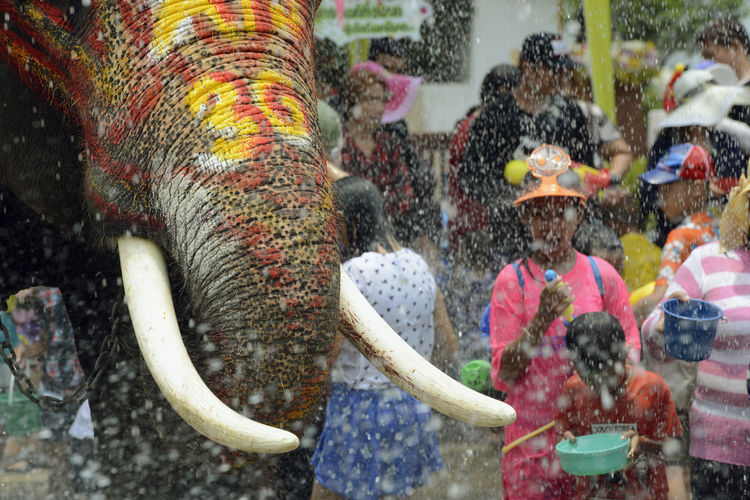 Elephant By People On Street During Festival