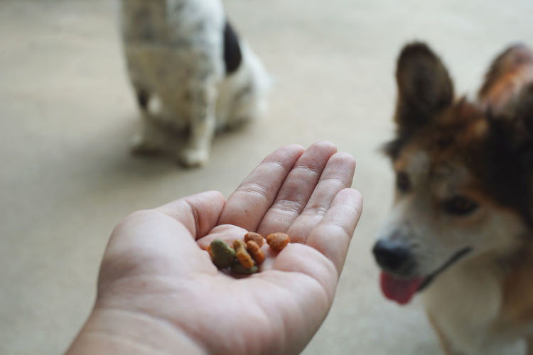 Human hand holding dog food and blured dog background