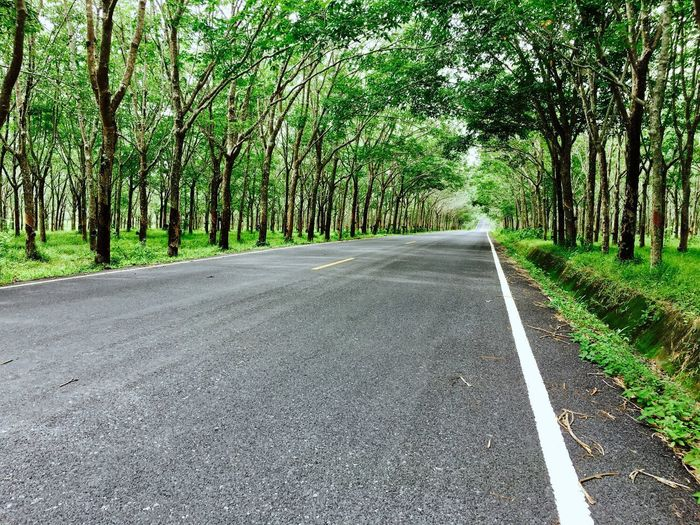 Road Tree The Way Forward Nature Transportation Asphalt Outdoors Day Green Color No People Tree Trunk Growth Straight Scenics Beauty In Nature Grass Winding Road Sky
