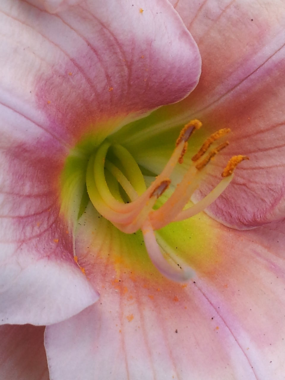 petal, flower, beauty in nature, nature, fragility, close-up, freshness, growth, flower head, no people, plant, outdoors, day, day lily
