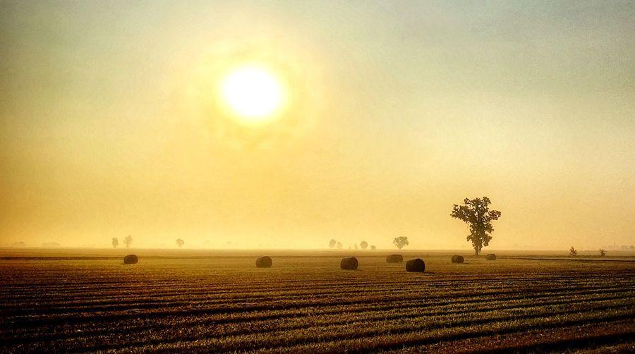 Sky Sun Plant Sunset Beauty In Nature Scenics - Nature Land