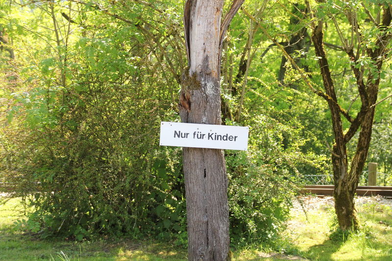sign on the tree Baum Communication Day Direction Growth Nature No People Outdoors Schild Sonne Sträucher Text Tree Tree Trunk