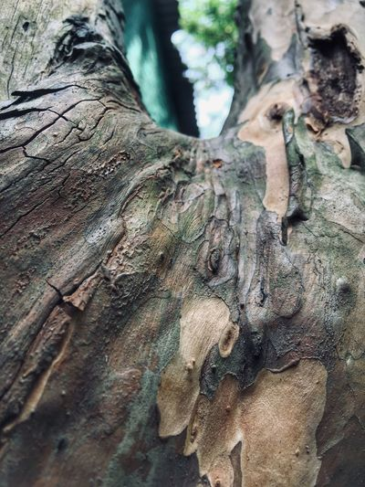 nature love #MobilePhotography #Nature  Low Angle View Wood - Material Outdoors Pattern Nature Rough Tree Trunk Natural Pattern First Eyeem Photo