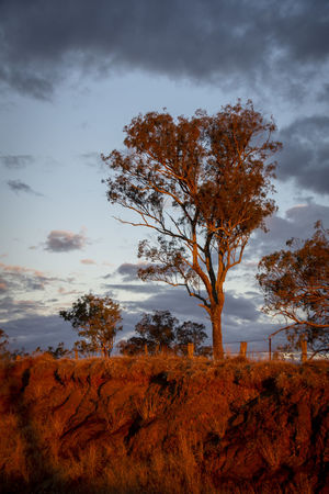 Late afternoon stormy sunset in Stanthorpe, Queensland Autumn Beauty In Nature Change Cloud - Sky Day Environment Field Growth Isolated Land Landscape Nature No People Non-urban Scene Outdoors Plant Remote Scenics - Nature Sky Tranquil Scene Tranquility Tree