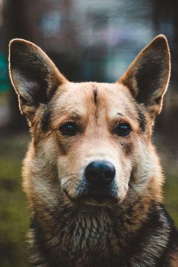 . Doggy Brave
