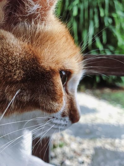 Cat BYOPaper! One Animal Domestic Cat Animal Themes Domestic Animals Pets Mammal Feline Focus On Foreground No People Close-up Whisker Day Portrait Outdoors Nature