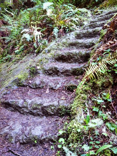 Stairs In Nature Eye4photography  Footpath Mendocino County California Eeyem Photography EyeEm Masterclass EyeEm Best Shots EyeEm Gallery EyeEm Nature Lover Through My Lens From My Point Of View What I See Mobile Photography Smartphonephotography Lobuephotos Lush Foliage Forest No People Outdoors Green Color Beauty In Nature