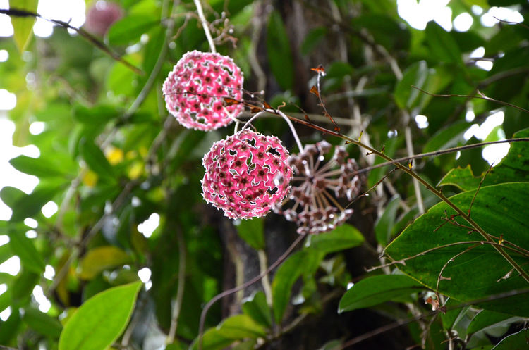 Ball Beauty In Nature Close-up Exotic Flowers Flower Focus On Foreground Freshness Green Color Growth Nature Plant Tree