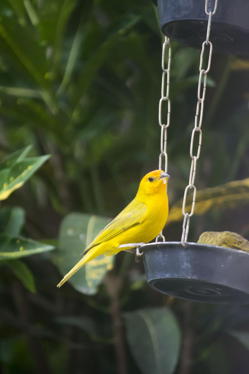 Close-Up Of Canaries On Bird Feeder