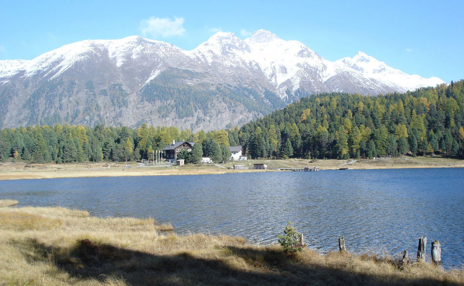 "Photo was taken mid October 2005 at ""Lej da Staz"", a small lake between St. Moritz and Pontresina, Switzerland. Alpen Beautiful Nature Countryside Engadin Engadina Forest Lake Landscape_Collection Lanscape_Collection  Lush Foliage Majestic Mountain Mountain Range No Edit/no Filter No Filter, No Edit, Just Photography Outdoors Reflection Scenics Snow Covered Swiss Alps Switzerland The Purist (no Edit, No Filter) Tranquil Scene Tranquility Landscapes With WhiteWall Sommergefühle"