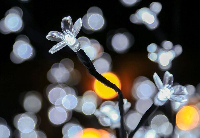 Specks of light Close-up Defocused Focus On Foreground Garden Lighting Illuminated Indoors  Lighting Equipment Night No People