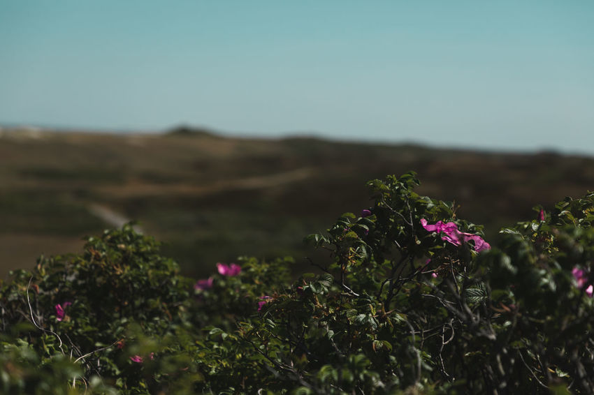 Green view. Arid Climate Beauty In Nature Clear Sky Day Environment Field Flower Flower Head Flowering Plant Fragility Freshness Growth Land Landscape Nature No People Outdoors Plant Selective Focus Sky Tranquil Scene Tranquility Vulnerability