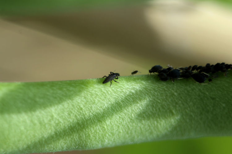 Close-up of fly on green leaf