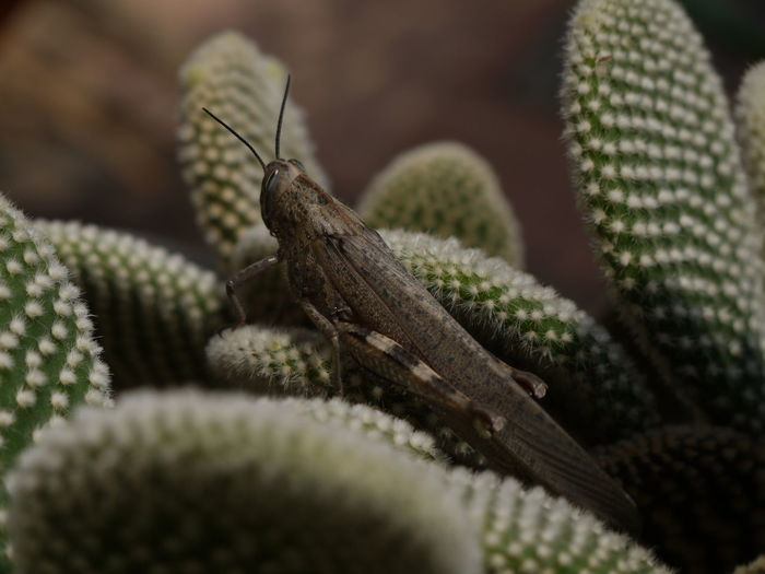 Close-up of cricket on plant