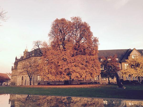 Architecture Autmn Autmn Colors Built Structure Herbst No People Spiegelung Tree