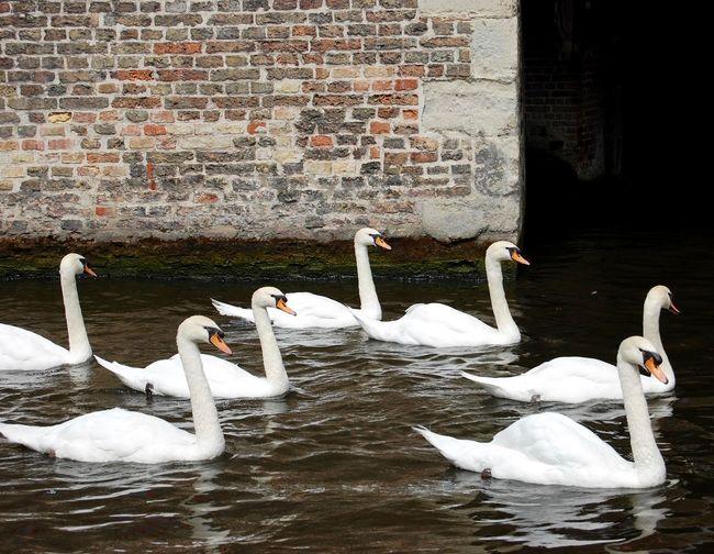 Canals Summer