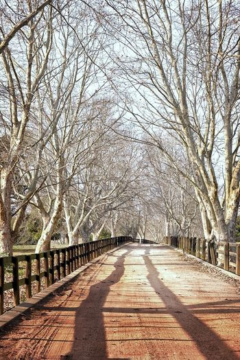 Winter lane Tree The Way Forward Direction Plant Nature Bare Tree Diminishing Perspective No People Shadow vanishing point Treelined Day